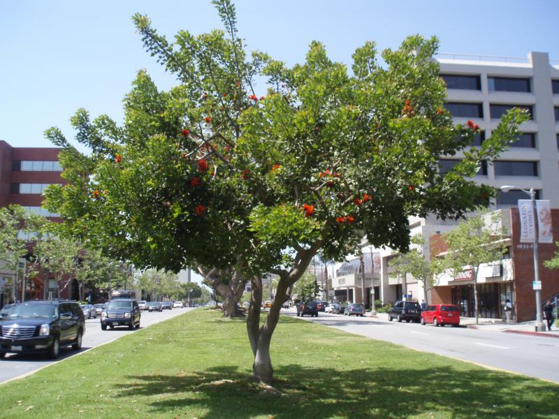San Vicente Blvd. in Brentwood